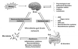 Gut-Brain-Biome Axis